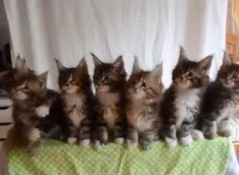 News video: Seven Cute Kittens With Great Reflexes